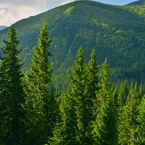 mjb-cuidado-e-importancia-de-los-bosques-bosques.png
